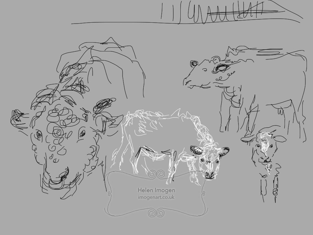 Prize bull, Harry