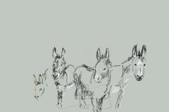 Prize donkeys