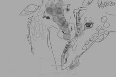 Giraffe baby with mama